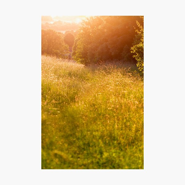 Golden Afternoon Photographic Print