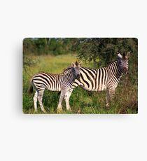 Zebra & Baby Leinwanddruck