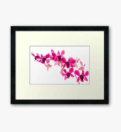 Phaelenopsis Pink Framed Print