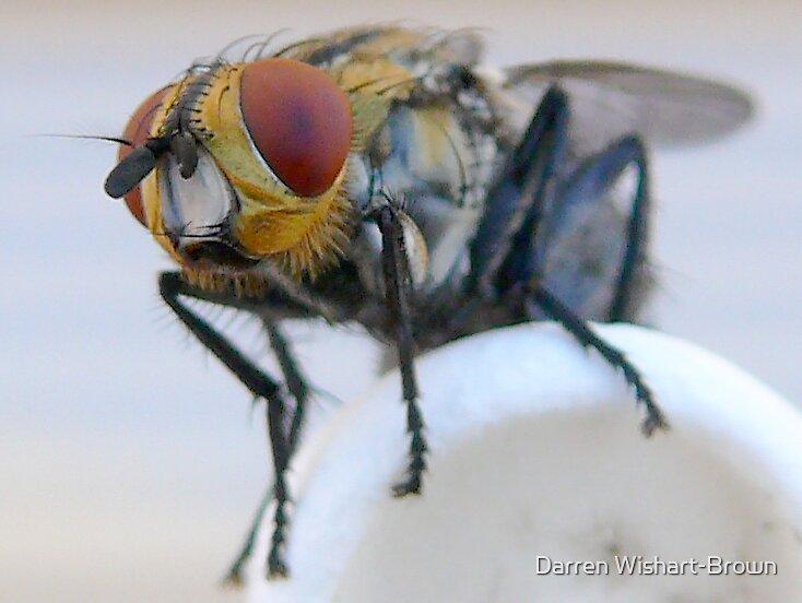 Blue Bottle Fly 2 by Darren Wishart-Brown