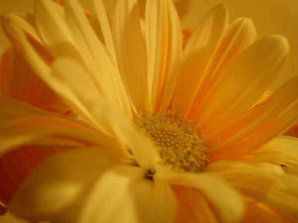 daisy by jimipop