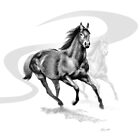 Master Hand (USA) Thoroughbred Stallion by Patricia Howitt