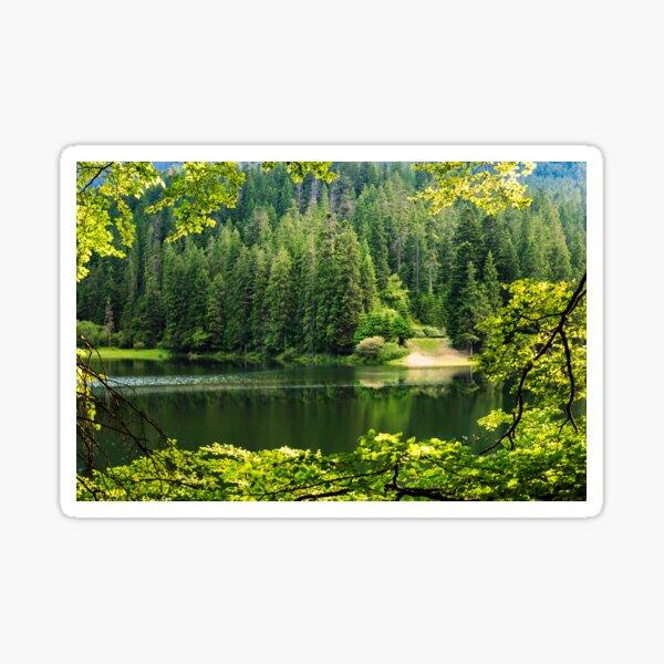 lake in pine forest Sticker