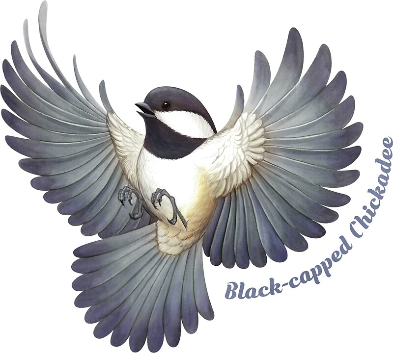Black capped chickadee by jadafitch
