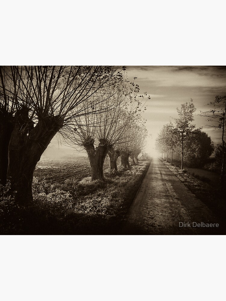 Path; willows b&w by Delbaere