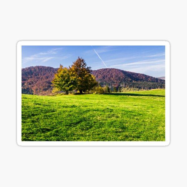 trees near valley in mountains  on hillside Sticker