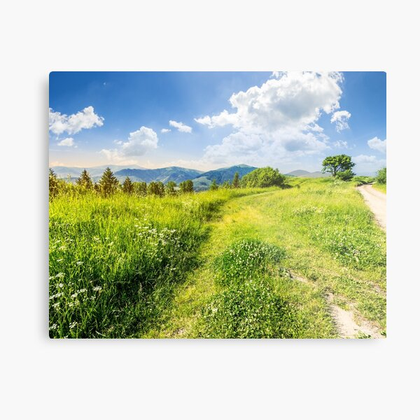 road through the meadow on hillside Metal Print
