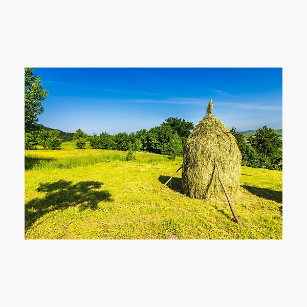 field with haystacks Photographic Print