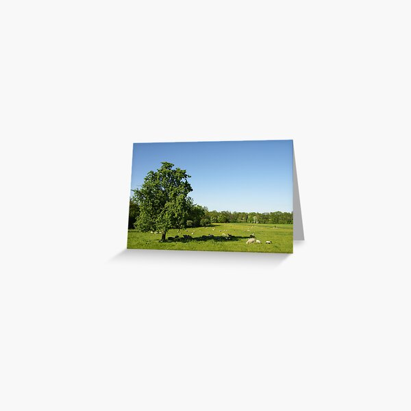 The Shadow of a Tree Greeting Card