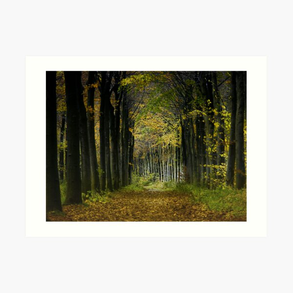 Lane; trees Art Print