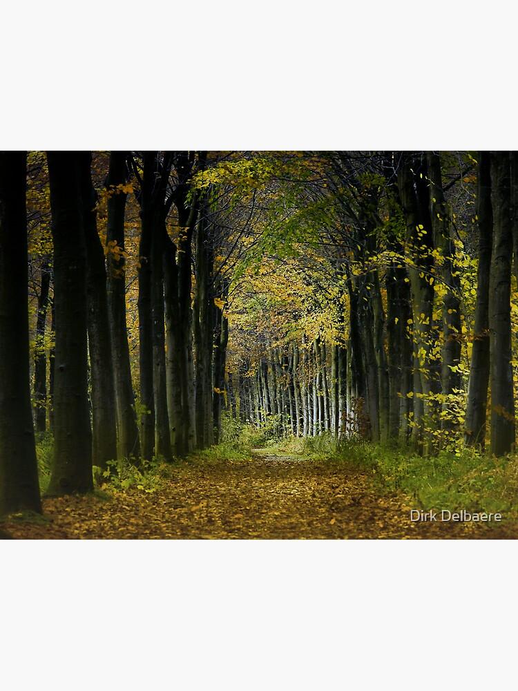 Lane; trees by Delbaere