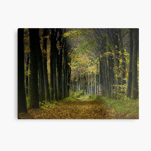 Lane; trees Metal Print