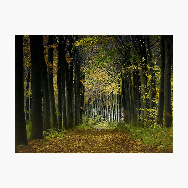 Lane; trees Photographic Print