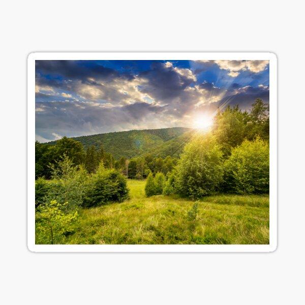 forest glade on hillside at sunset Sticker