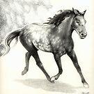 Appaloosa Stallion by Patricia Howitt
