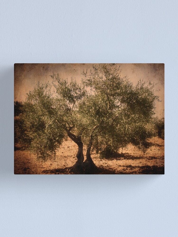 Alternate view of Olive tree Canvas Print