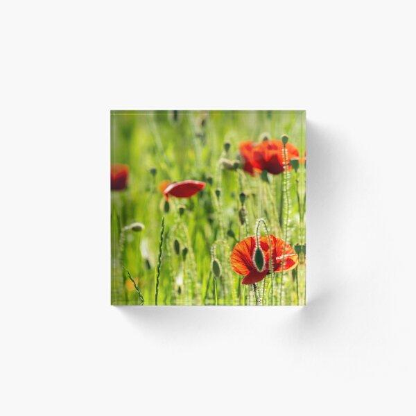 red poppy in the wheat field Acrylic Block