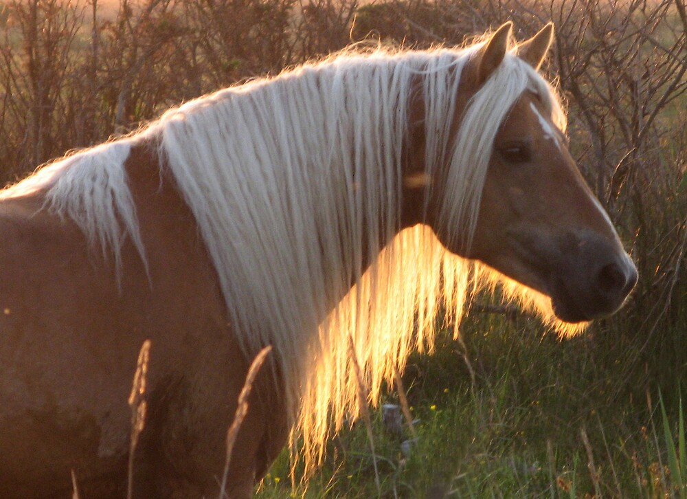 Horse in the sunset by Trine