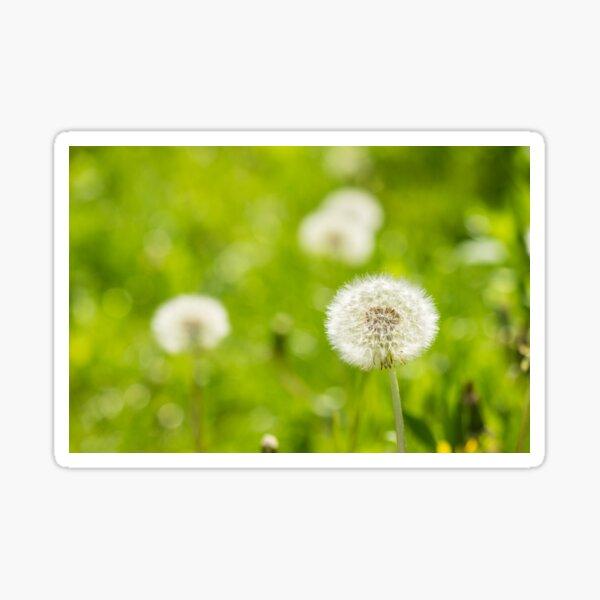 white dandelion on green grass blur background Sticker