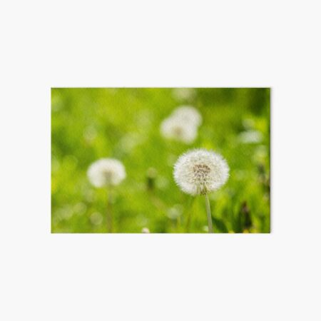 white dandelion on green grass blur background Art Board Print