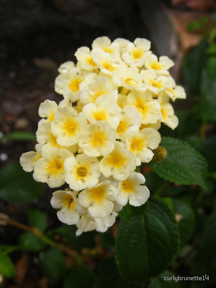 Yellow Flowers by curlybrunette14