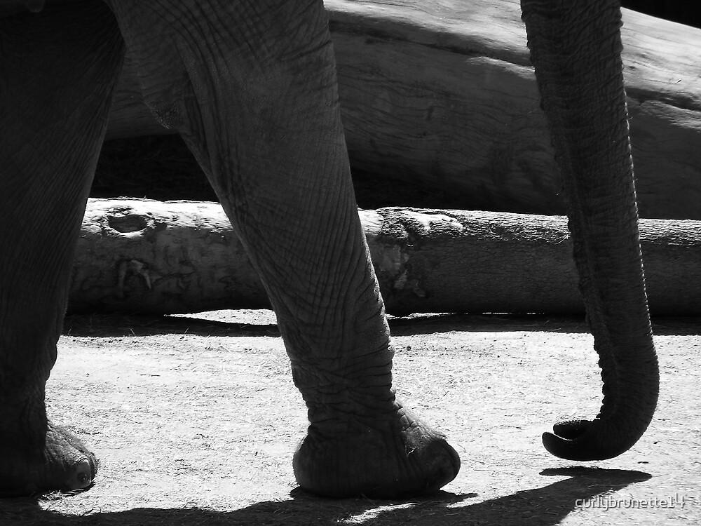Elephant Walk by curlybrunette14