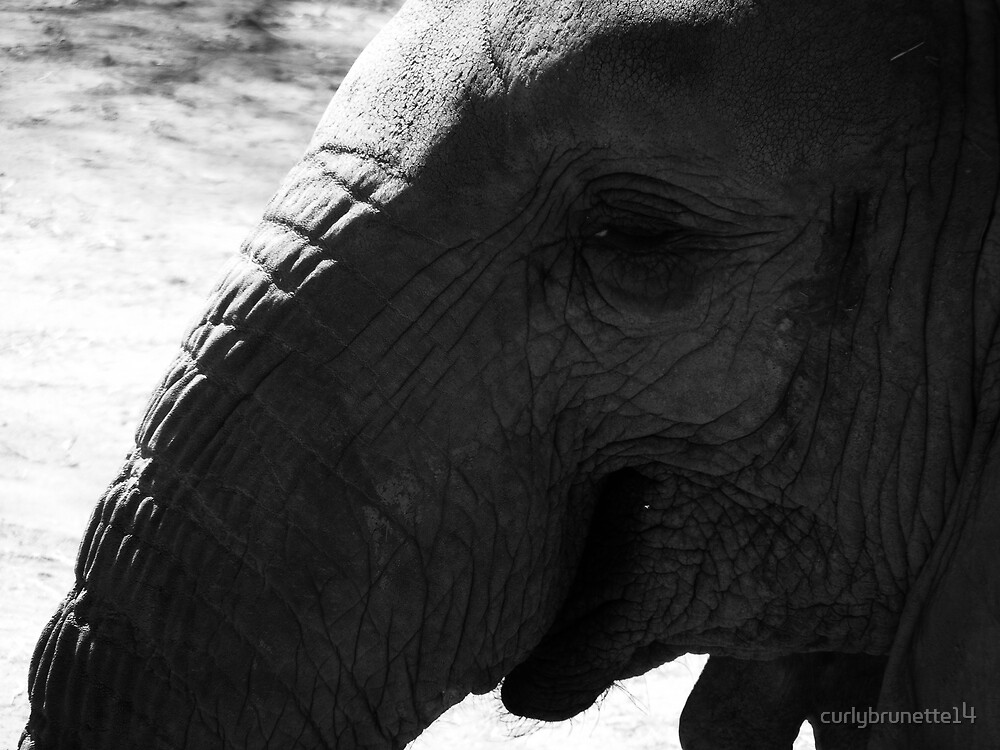 Elephant Portrait by curlybrunette14