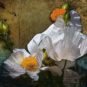White Flower Composite by gemlenz