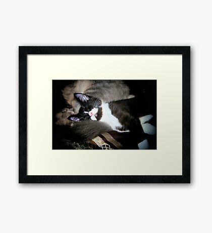 Slepping Cat Framed Print