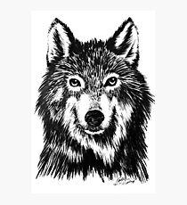 Wolf in ink Photographic Print