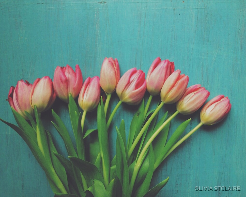 Pink Spring tulips by OLIVIA JOY STCLAIRE