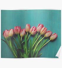 Pink Spring tulips Poster