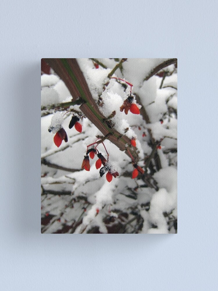 Alternate view of Snow on the Berries Canvas Print