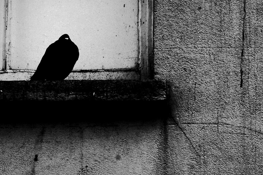 Bird on a ledge by lee ingleton