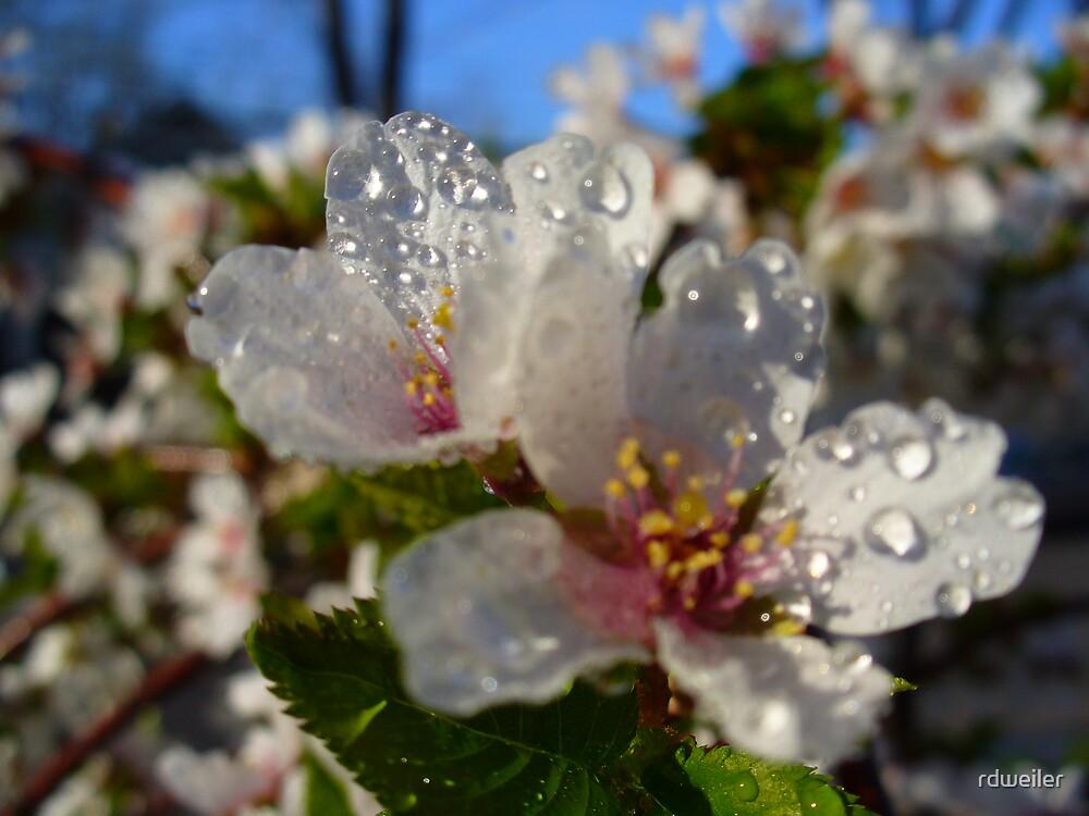 flowers by rdweiler