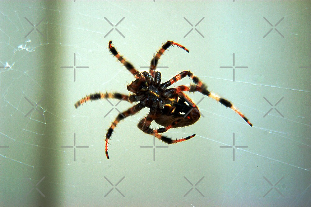 Spider by Clayton Bruster