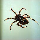 Spider by Clayton Bruster
