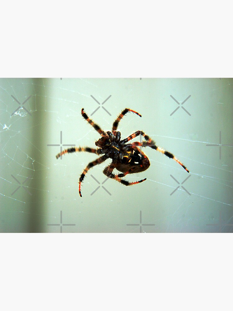 Spider by claytonbruster