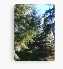 Coniferous Evergreen Canvas Print
