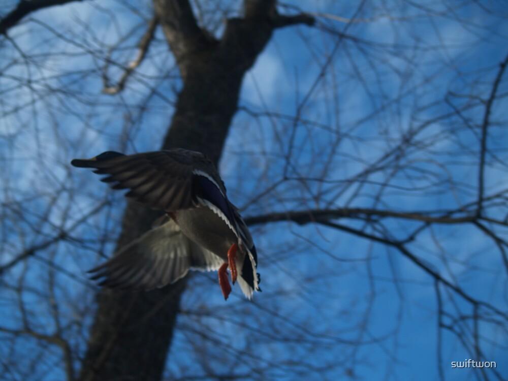 duckair by swiftwon