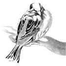 Cute Fluffy Bird Sleeping Sparrow by Patricia Howitt