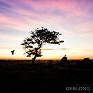 SINGLE TREE by ketut suwitra