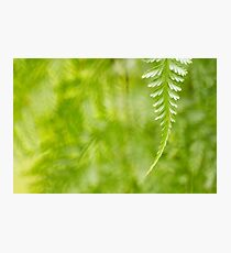 Tropical Fern Photographic Print
