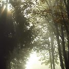 Fog and Sunrays by Kat Miller