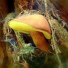 Hidden Beauty by Eugenio