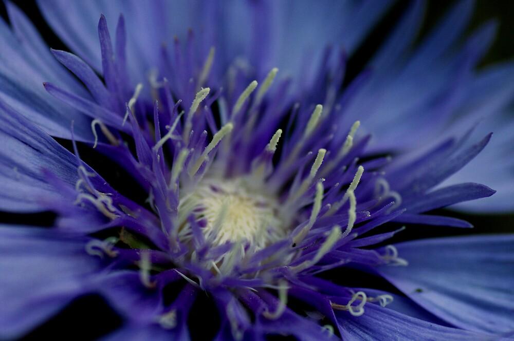 Lilac flower macro by Mark Jackson