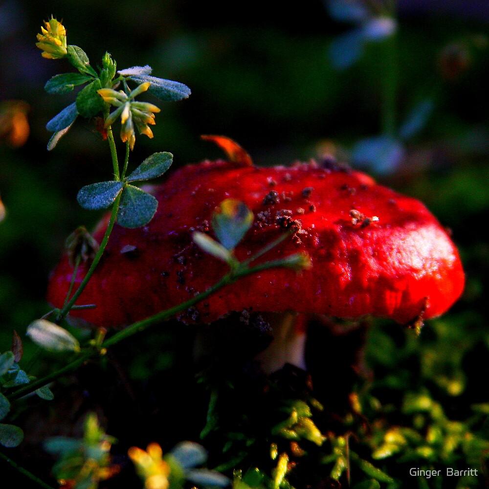 RED MUSHROOM by Ginger  Barritt