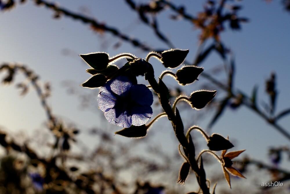 silhouette flower by assh0le