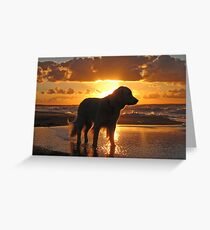 My Golden Retriever Ditte on the beach at sunset Greeting Card