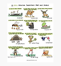 12 Green Resolution Suggestions from Wild Animals Photographic Print